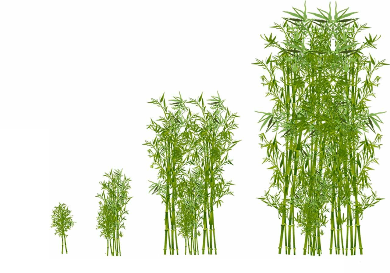 Le Bambou Moso Onlymoso France